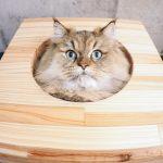 大阪の壁の中に子猫がいた居酒屋ひいろ亭の場所は?【アンビリバボー】