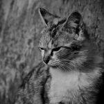 桐谷さん猫飼うの無理!保護施設審査通らないでしょ【月曜から夜ふかし】