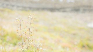 だんじゅかりゆし(沖縄民謡)の意味や歌詞・工工四(三線楽譜)は?天皇陛下と歌声の響との関係も!