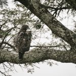 【アオハルTV】鳥と空飛ぶ男(パラホーキング)って誰で名前は?動画や画像も!