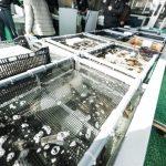 魚の電気締めとは何?やり方(方法)が初耳学で公開!北海道根室市の松田商店が考案者!通販・お取り寄せは?