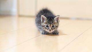 沖昌之(ネコ写真家)のwikiは?ぶさにゃん先輩がきっかけ!?猫写真どうやって撮るの?写真集も気になる!【志村どうぶつ園】